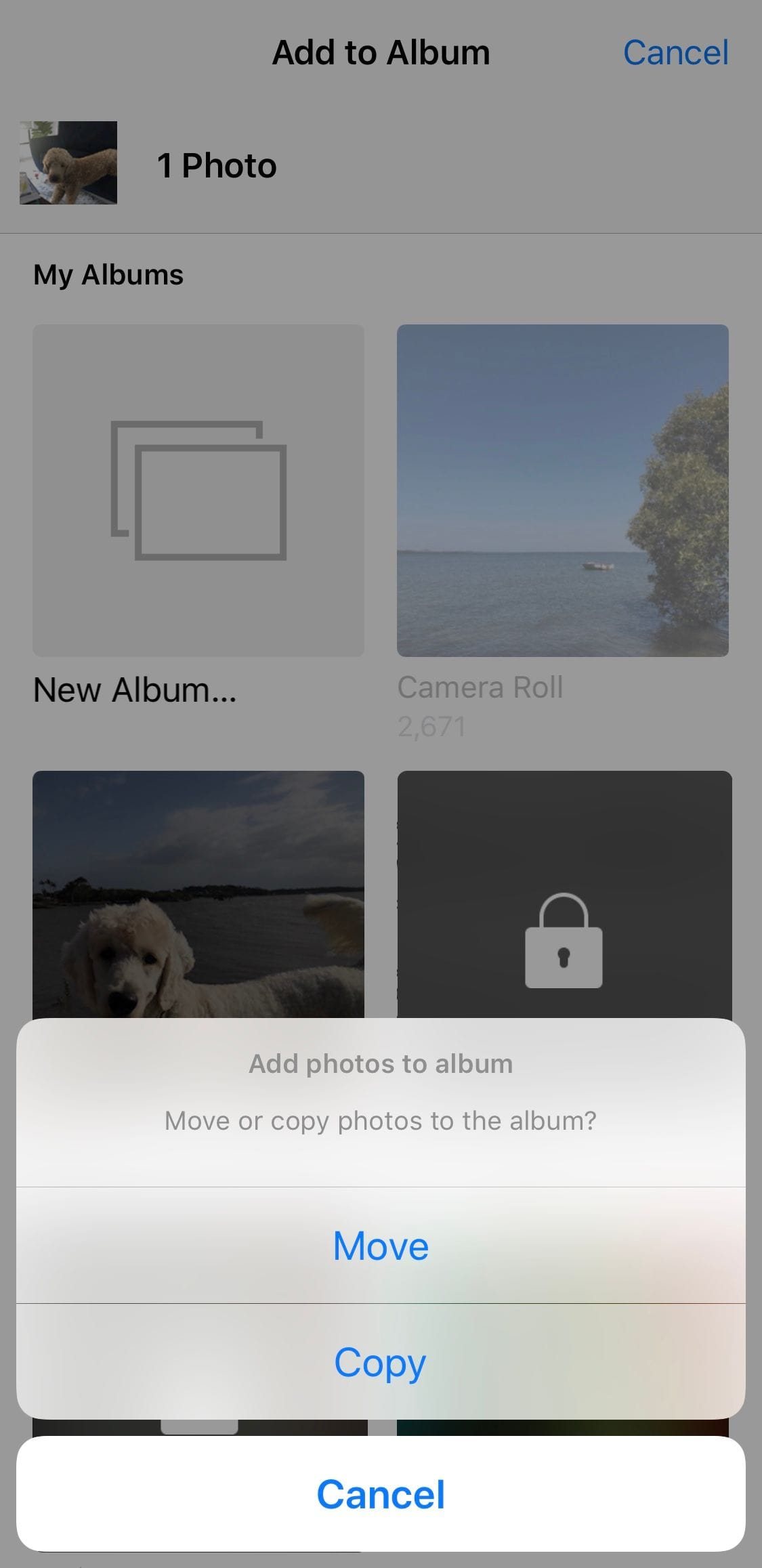 Download PhotoManager (iOS 12) 1.0.7-1k